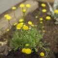 春になって 皆たちが花見に出るに及んで